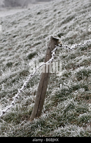 Frozen barbed wire fence in field - Stock Photo