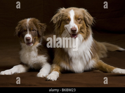 Close-up of two dogs lying with its puppy on floor - Stock Photo