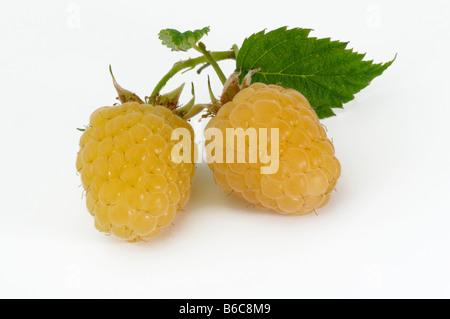 Raspberry (Rubus idaeus), yellow berries, studio picture - Stock Photo