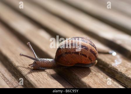 Eye to eye with a garden snail - Stock Photo
