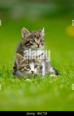 Close-up of two kittens in lawn - Stock Photo