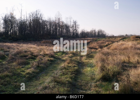 Vehicle Tire Tracks Leading Through Grassy Field in Autumn - Stock Photo