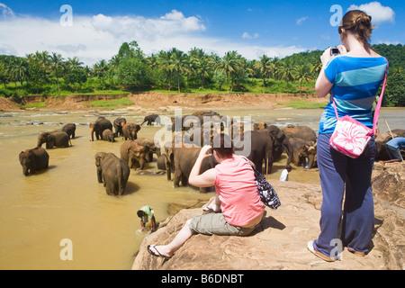 Tourists watching elephants bathe in the Maha Oya River near The Pinnawela Elephant Orphanage - Stock Photo