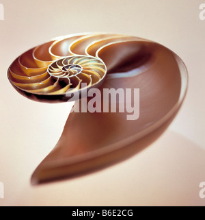 Nautilus shell, Section through the shell of anautilus - Stock Photo