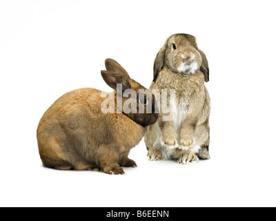 rabbit - Stock Photo