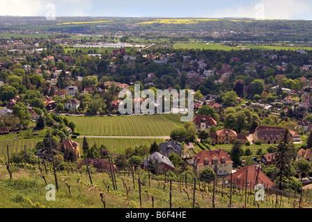 Elbe Valleya world heritage area seen from the Vineyards of Radebeul near Dresden, Germany, Saxony - Stock Photo