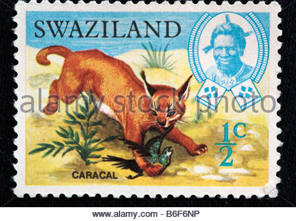 Caracal (Persian lynx, African lynx, Felis caracal), postage stamp, Swaziland - Stock Photo