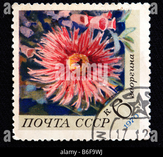 Dahlia (Dahlia variabilis), postage stamp, USSR, 1970 - Stock Photo