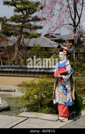 A Maiko, a trainee Geisha, in front of a Japanese Garden in Kyoto, Japan, Asia - Stock Photo