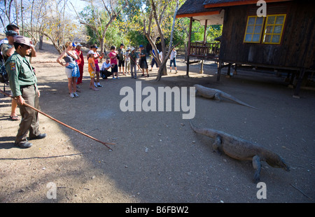 A ranger with a Komodo Dragon in the national park with tourists, Komodo National Park, UNESCO World Heritage Site, - Stock Photo