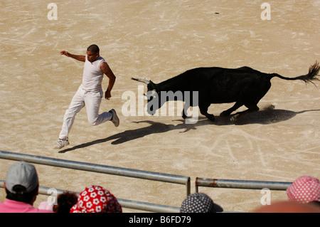 Bullfighting in the arena of Saintes Maries de la Mer, La Camargue, Provence, France, Europe - Stock Photo