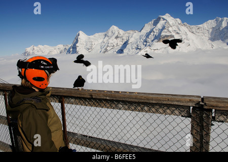 Skier, young boy feeding alpine chough's, view from Mt Schilthorn to Eiger, Moench, Jungfrau, Grindelwald, Bernese - Stock Photo