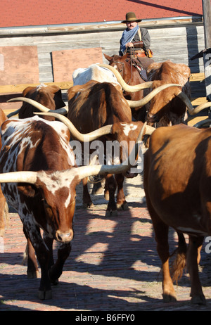 A Texas Longhorn cattle drive through the Stockyards in Fort Worth Texas National Historic District Exchange Ave - Stock Photo