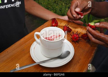 Cup of tea made from Hibiscus or Rose of Sharon or Rosemallow (Hibiscus sabdariffa) blossoms, Yayorin, Pangkalan - Stock Photo