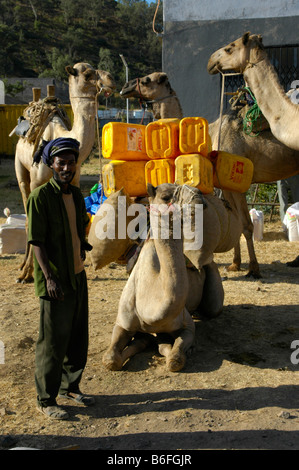 Camels being loaded with yellow plastic containers near Aksum, Ethiopia, Africa - Stock Photo