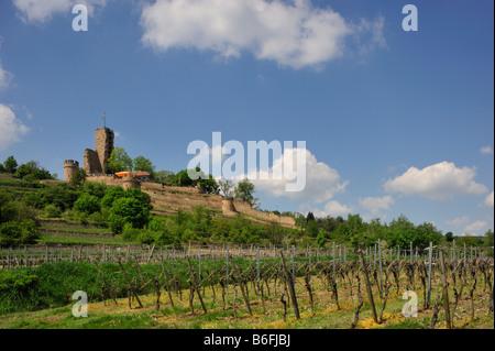 viticulture at Wachenheim, Germany, Rhineland-Palatinate, Palatinate ...