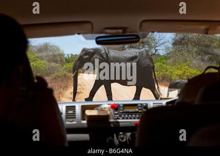 elefant crossing Game drive SAFARI in KRUGER KRÜGER NP nationalpark car vehicle jeep bus minibus national park south - Stock Photo