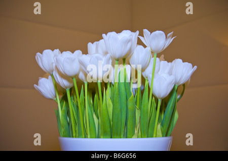Vase of tulip flowers indoors. - Stock Photo
