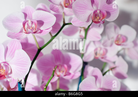 Purple orchid flower close-up - Stock Photo