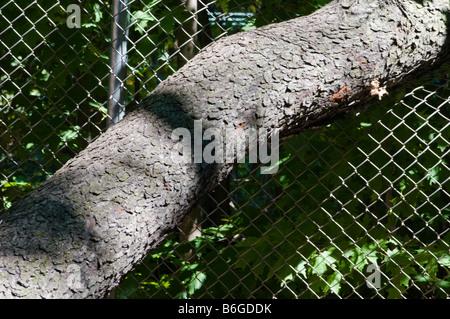 Tree limb wire fence - Stock Photo