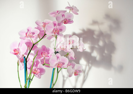 Purple orchid flower - Stock Photo