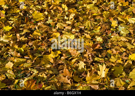 Sycamore tree leaves changing colour at the start of for When will the leaves start changing 2017