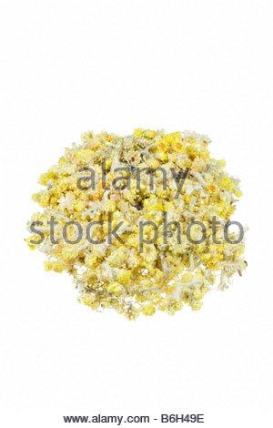 Everlasting flowers herb (Helichrysum arenarium) Stock Photo