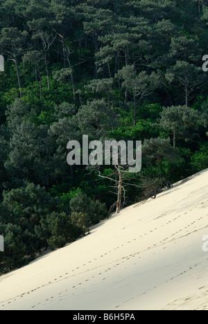 Arcachon France Sand dunes of Pyla & Pine Forest - Stock Photo