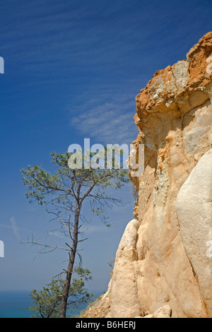 CALIFORNIA - A torrey pine near a colorful sandstone bluff overlooking the Pacific Ocean in Torrey Pines State Reserve. - Stock Photo