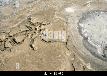 Salt flats in Camargue, France. - Stock Photo