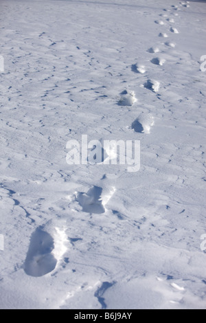 Winter concept footprints in the snow - Stock Photo