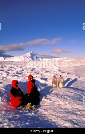 Antarctica, Australian Antarctic Territory, Auster 'EP' Rookery. Emperor Penguins (Aptenodytes forsteri) and tourists - Stock Photo