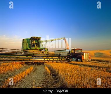 Farmer unloading wheat from combine near Colfax Washington (MR) - Stock Photo