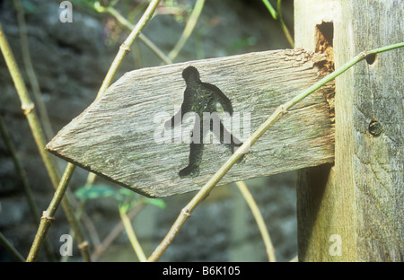 Rotting wooden sign on post etched with iconic image of Public footpath walker and overgrown with stems of Elder - Stock Photo