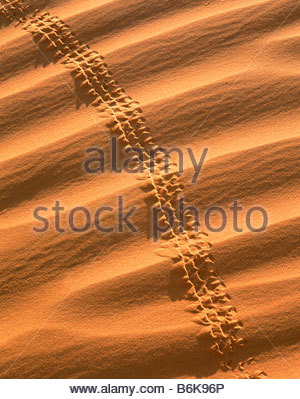 Beetle tracks in sand dunes with wind ridges Monument Valley Navajo Indian Reservation Arizona - Stock Photo