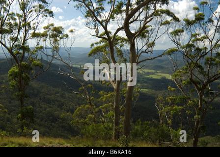 Main Range , Scenic Rim, Queensland, Australia - Stock Photo