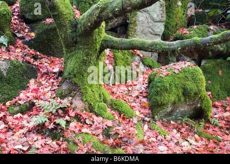 Hidden Japanese garden in Eskdale, Cumbria - Stock Photo