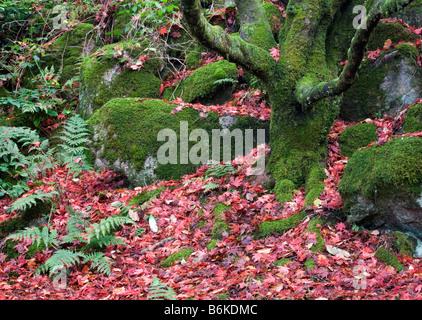 A hidden Japanese garden in Eskdale Cumbria - Stock Photo
