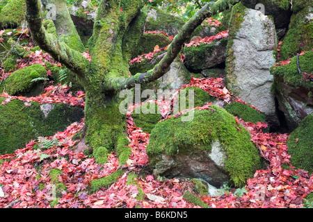 Hidden Japanese garden in Eskdale Cumbria - Stock Photo