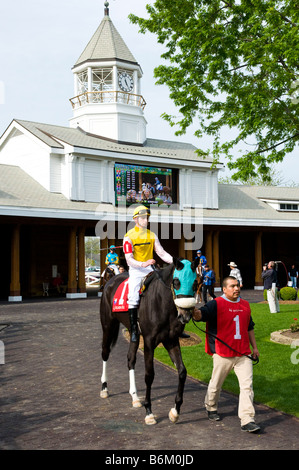 Thoroughbred race horse being warmed-up in paddock parade prior to race. - Stock Photo