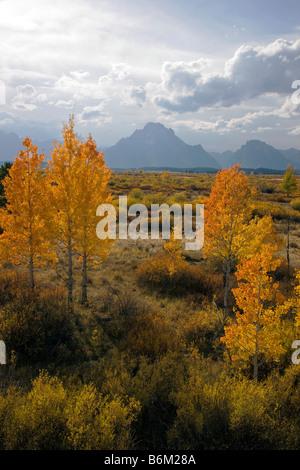 Aspen trees golden in autumn frame the Grand Teton Mountains, Grand Teton National Park, Wyoming, USA - Stock Photo