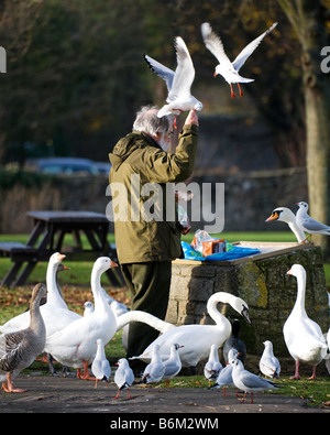 A Man Feeding Wild birds in a Public Park. - Stock Photo