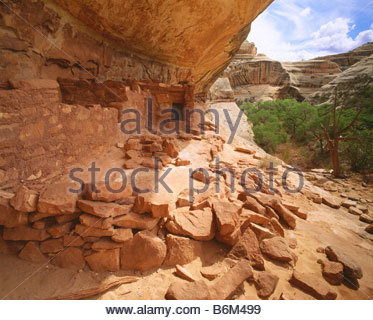 Horsecollar Ruin Anasazi culture dwelling ca AD 1200 White Canyon Natural Bridges National Monument Utah - Stock Photo