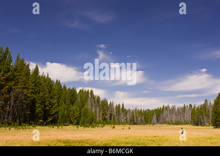 YELLOWSTONE NATIONAL PARK, WYOMING, USA - Boy hikes across meadow Riddle Lake area. MR