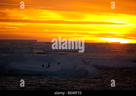 Bright Orange sky sunset overshadowing foreground icebergs, floating ice sheets with Adelie Penguins on Ice in Antarctica. - Stock Photo