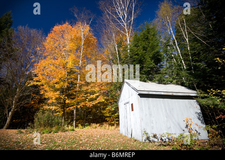 Sunlight Falling On A Rustic Toolshed Surrounded By Autumn Trees