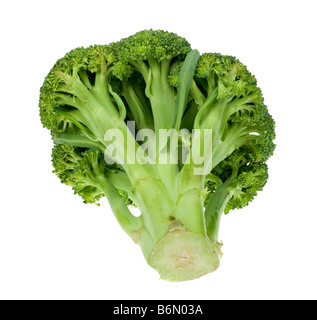 fresh broccoli isolated on a white background - Stock Photo