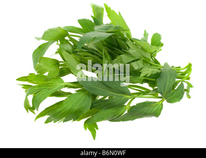 fresh lovage herb isolated on a white background - Stock Photo