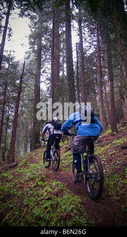 mountain bikers on Bear Creek Trail, Camp Nelson, Sequoia, California - Stock Photo