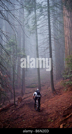 mountain biker on Bear Creek Trail, Camp Nelson, Sequoia, California - Stock Photo